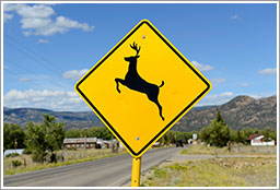 Deer-Collision-Safety