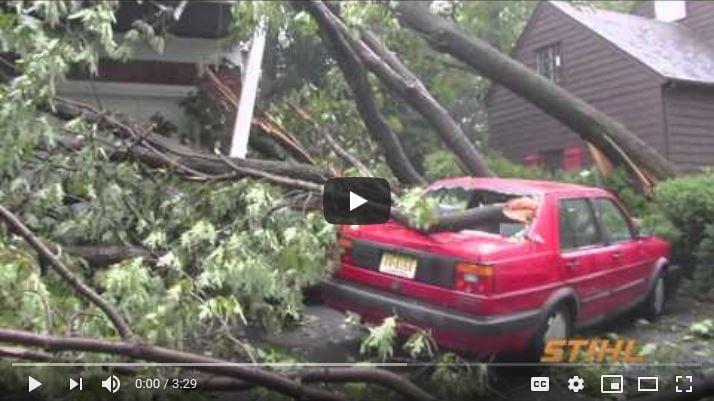 Tree damage claim